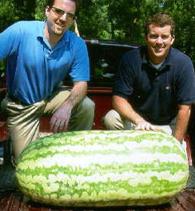 Watermelon 2005record