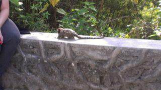 Anotehr monkey